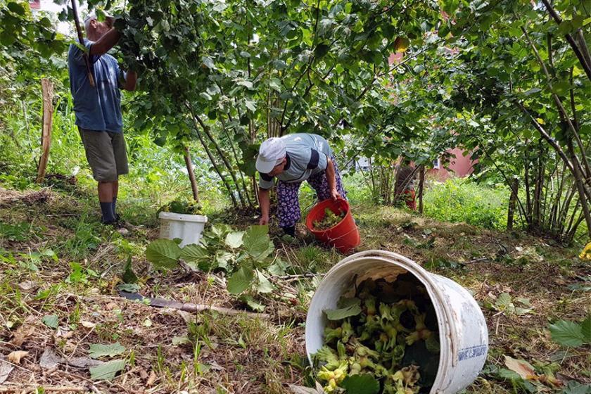 Tüm Köy Sen: Üreticinin umuduyla oynuyorlar