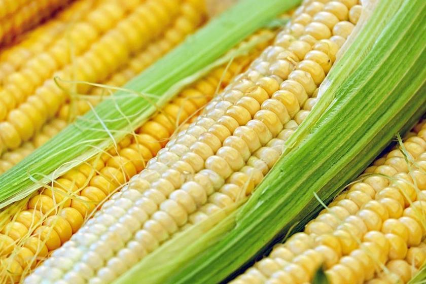 Tarım ve Orman Bakanı Pakdemirli mısır alım fiyatını açıkladı