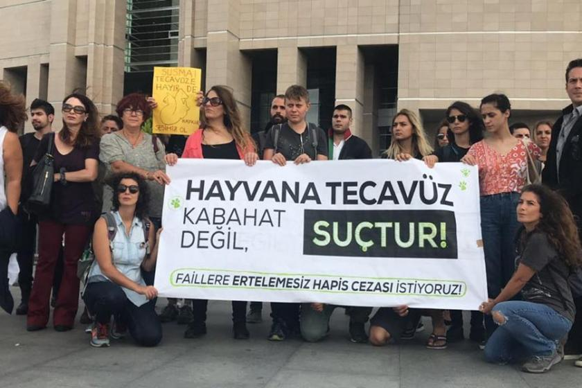 Tekirdağ'da 'köpeğe tecavüz' iddiası