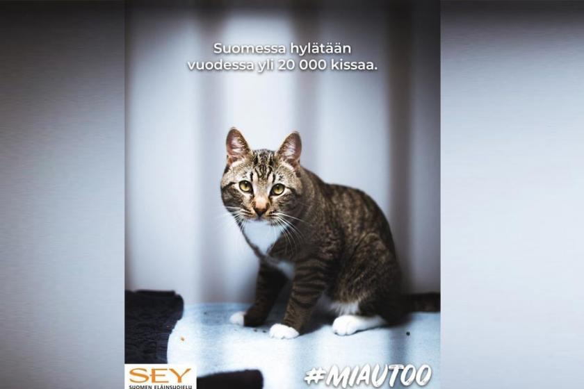 Finlandiya'da sahipsiz kediler için #MIAUtoo kampanyası