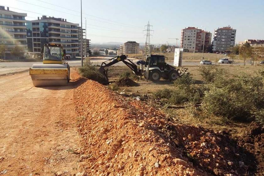 İzmir Büyükşehir Belediyesi yol için zeytin ağaçlarını söktü