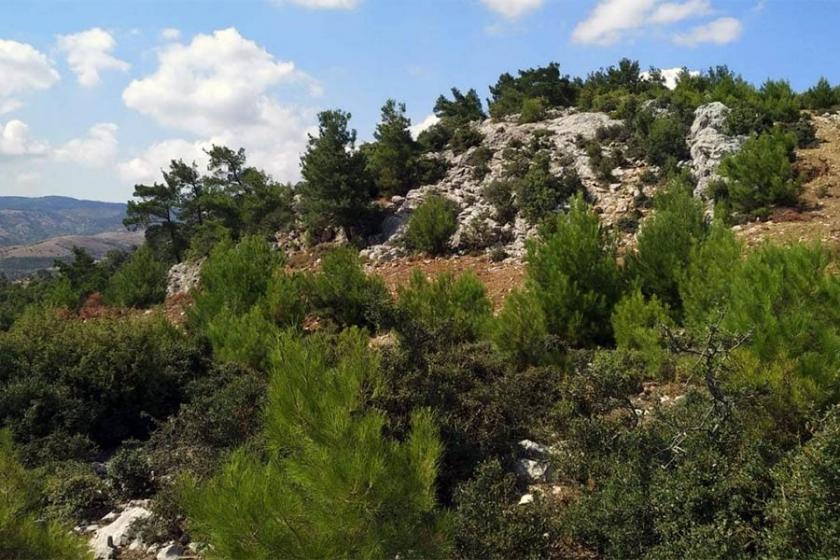 DSİ, İzmir'de baraj yapımı için ağaç kesecek