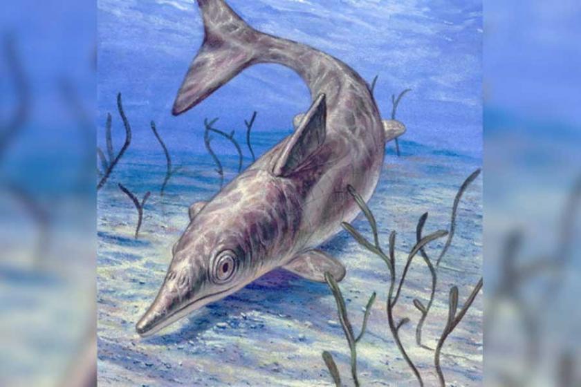 Eski 'deniz canavarı' aslında devasa bir yunusmuş