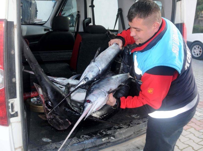 Yasağa rağmen avlanan 5 kılıç balığına el konuldu