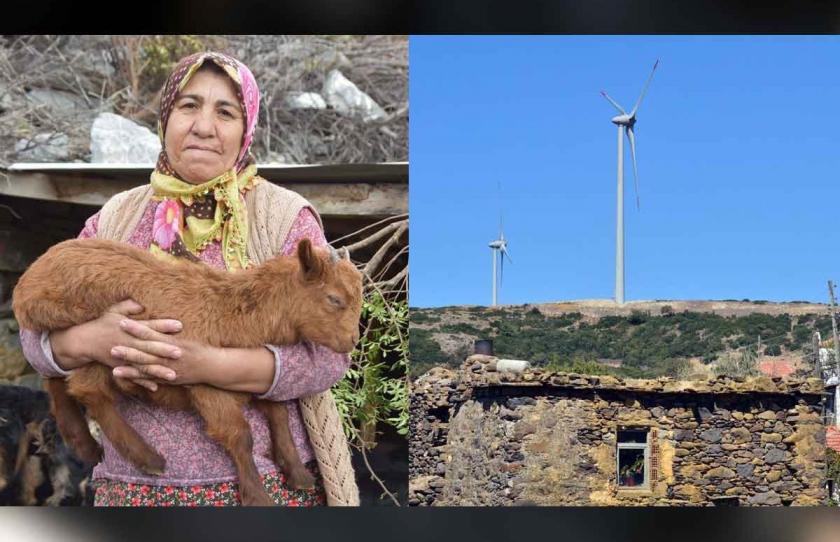 Karaburun'da kurulan RES'ler, kıl keçilerinin otlak alanlarını bitirdi