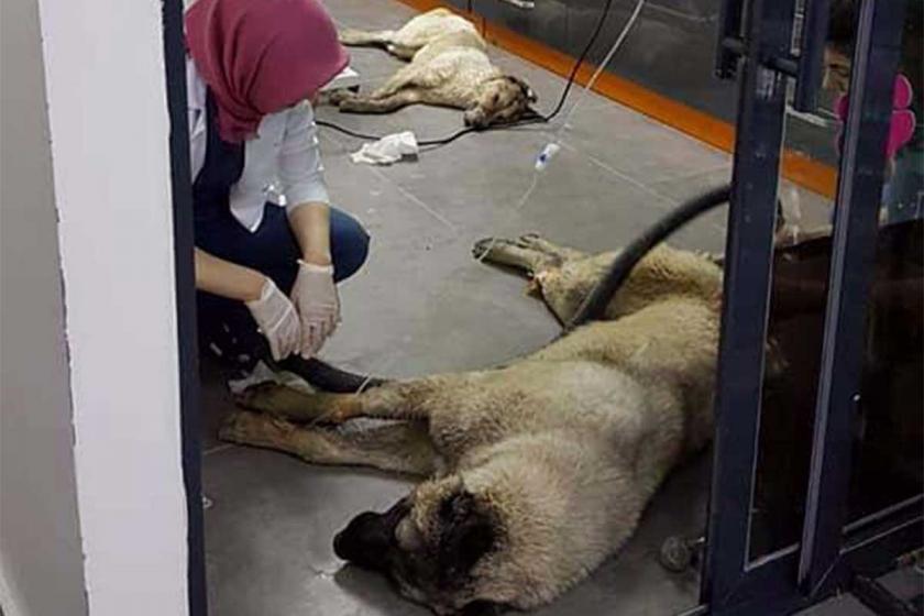 Ankara'da köpekleri zehirleyen sanıklar, ağır cezada yargılanacak