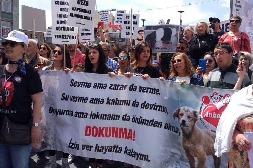 Hayvan Hakları Araştırma Komisyonu raporunu 4 Ekim'de Meclis'e sunacak