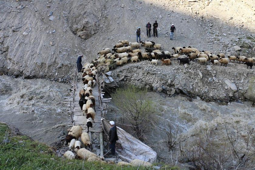 Dünya Çiftçiler Günü   Yayla yasakları besiciye hayvan sattırıyor