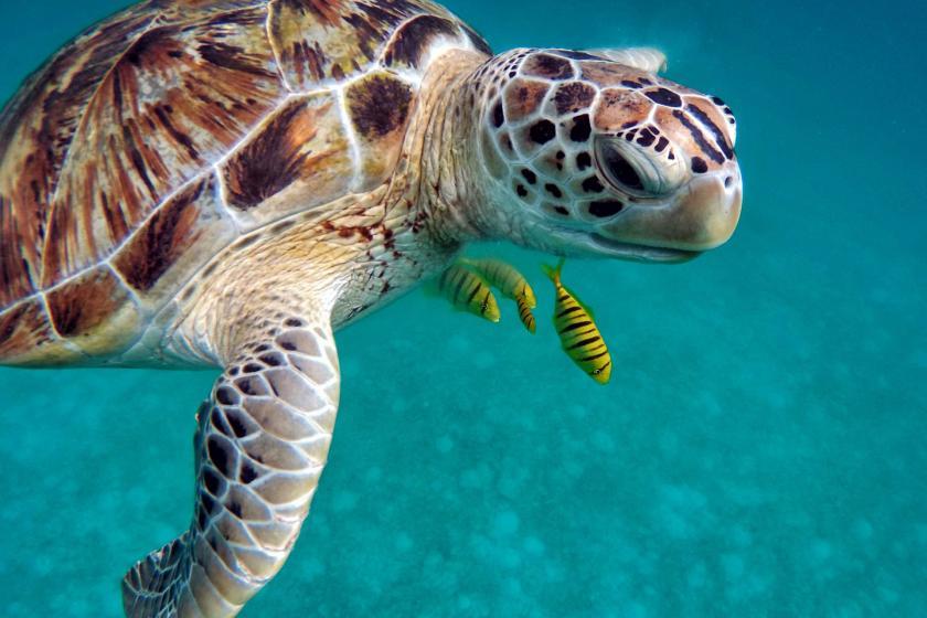 8 Haziran Dünya Okyanus Günü   Okyanuslar büyük tehlike altında