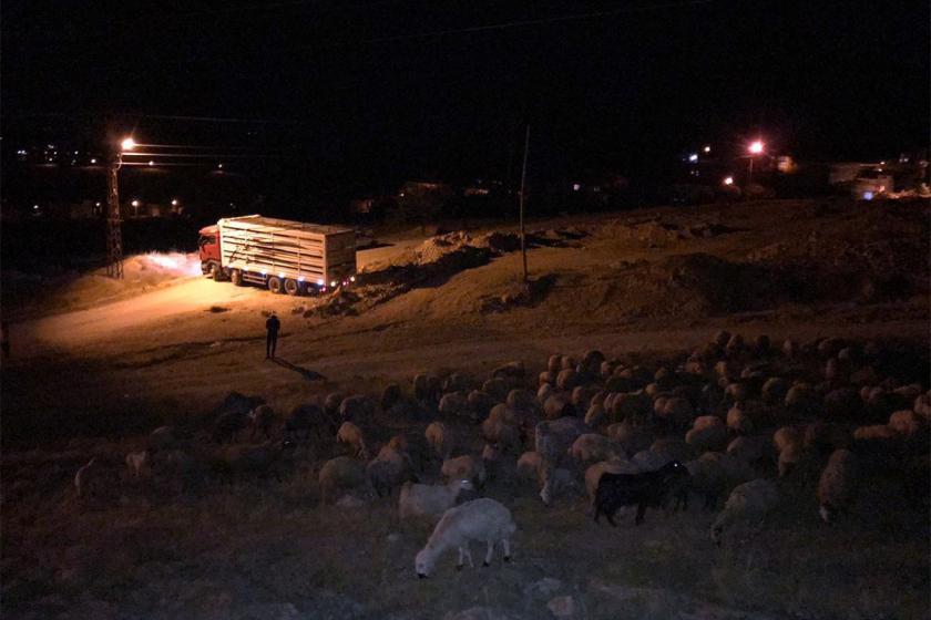 Yaylaya çıkmak isteyen köylülere engel: Hayvanlarıyla gözaltına alındı