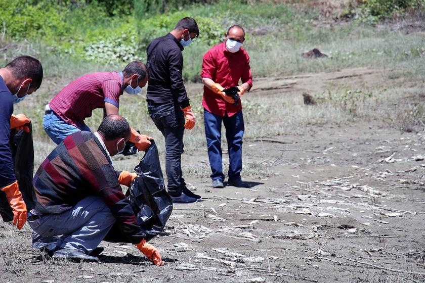 Erzurum Ayvalı baraj göründe toplu balık ölümü tedirginliği