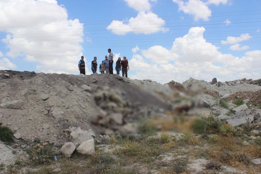 Konya'da hayvan katliamı: 12 köpek öldürülmüş halde bulundu