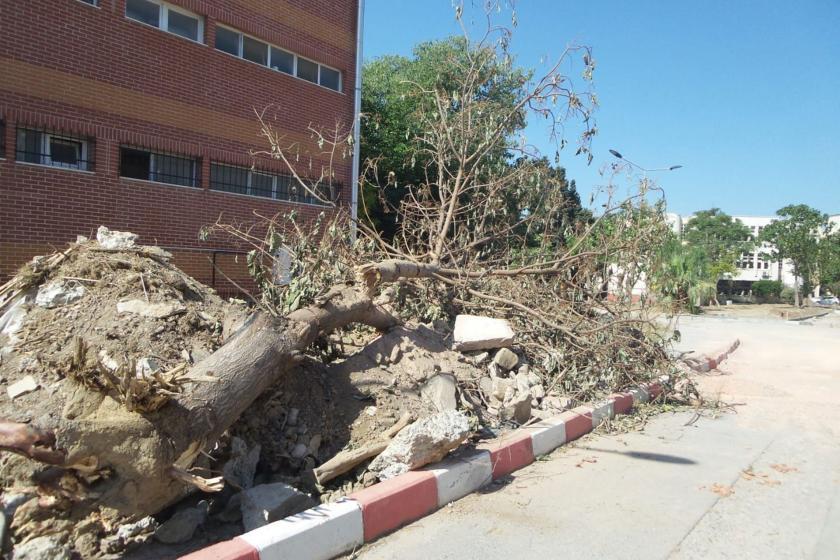 """Ege Üniversitesinde ağaç kesimine tepki: Böyle """"yeşil üniversite"""" olunur mu?"""