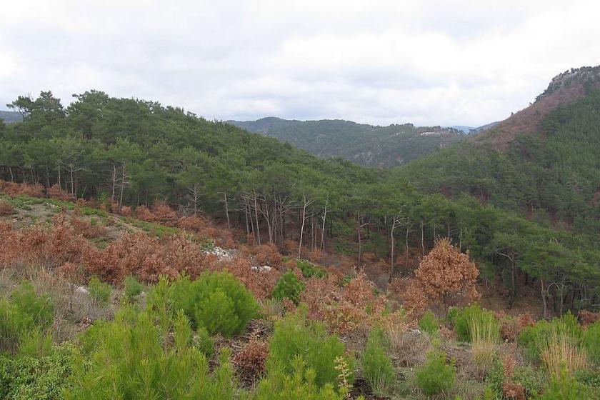 Ekoloji Birliği: Kirazlı altın madeni projesi acilen durdurulsun - Evrensel.net