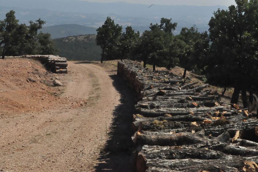 Çanakkale'de AKP'li vekillerin inkar ettiği ağaç katliamı görüntülendi