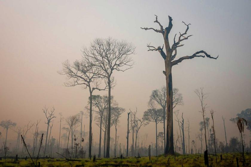 Brezilya'da son 10 günde 15 binden fazla orman yangını çıktı
