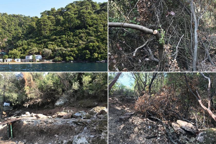 Arazisine yol açmak için sit alanındaki ağaçları kestirdi!