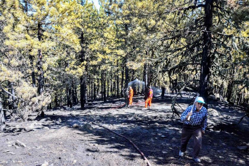 Kütahya'da orman yangını: 8 hektar çam ormanı zarar gördü