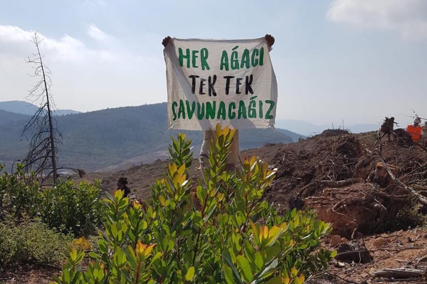 Kirazlı'da ağaç kesimini sürdüren Doğu Biga Madencilik, Çamyurt'tan vazgeçmiş değil!