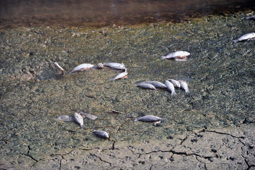 Boya fabrikasının kimyasal atıkları balıkların ölümüne neden oldu