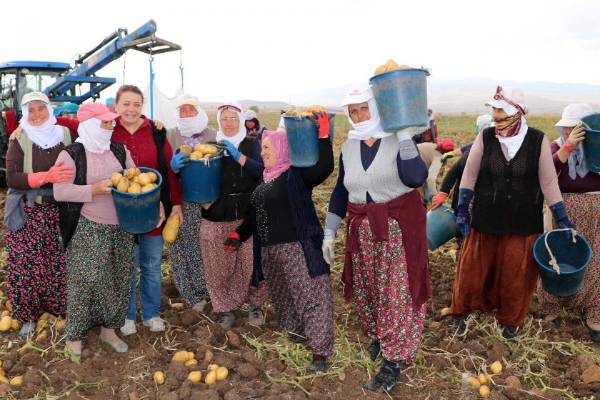 Patates üreticisi maliyetin düşürülmesini istedi