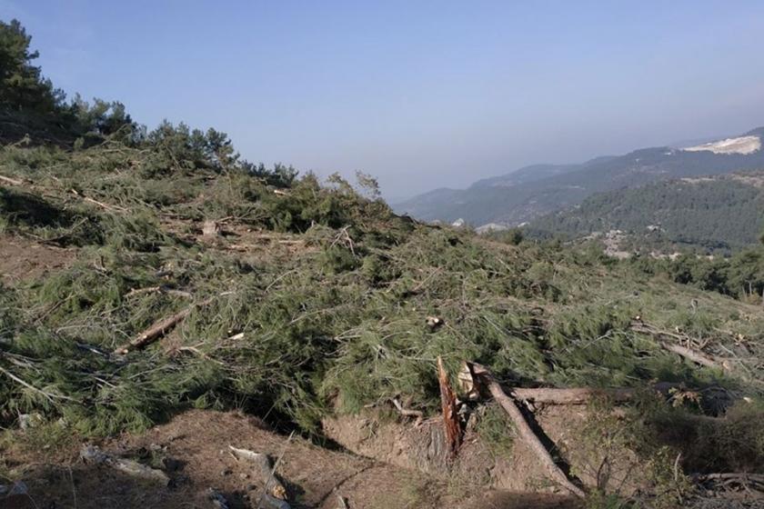 Kesilmiş ağaçlar