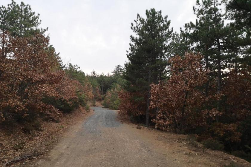 Kirazlı Balaban bölgesindeki ormandan bir görünüm