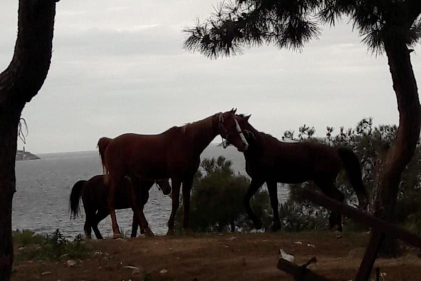 Adada açık alandaki atlar