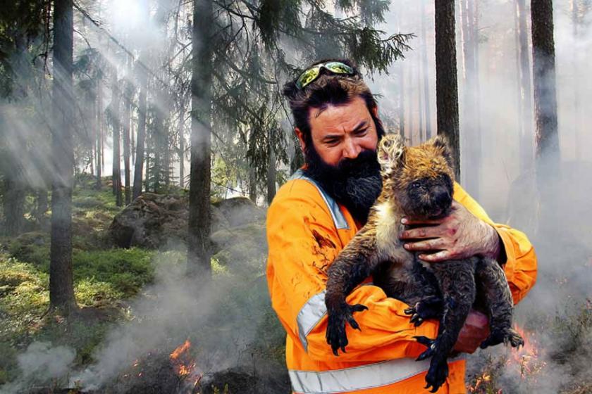 Yanan orman fotoğrafı ve yangından kurtarılan koala