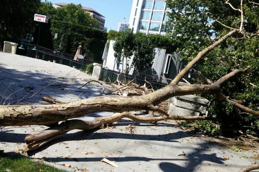 Gezi Parkında kesilen ağaç