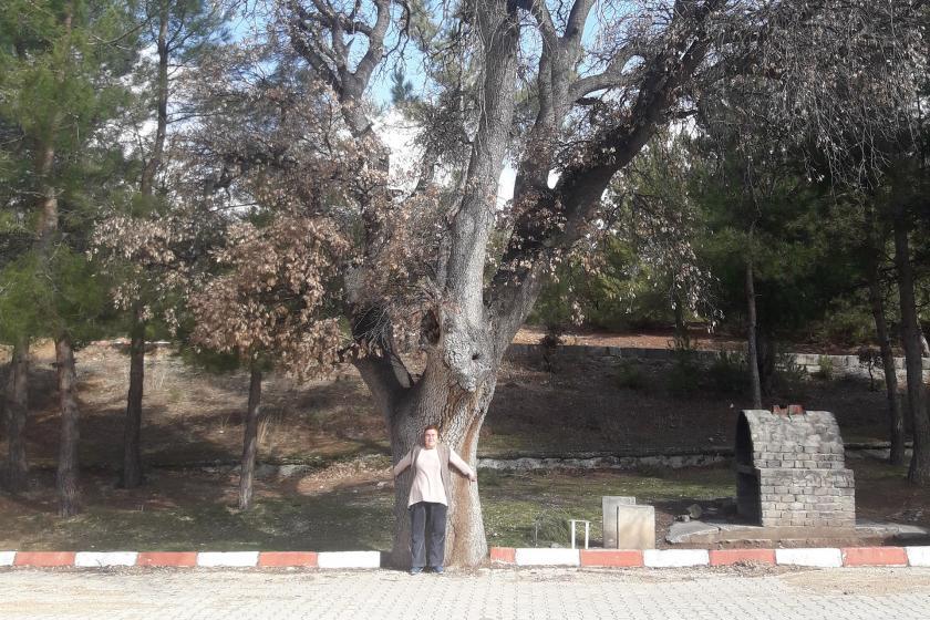 Evrenli Doğa Parkında Zehra Kaya bir ağaca sarılmış.