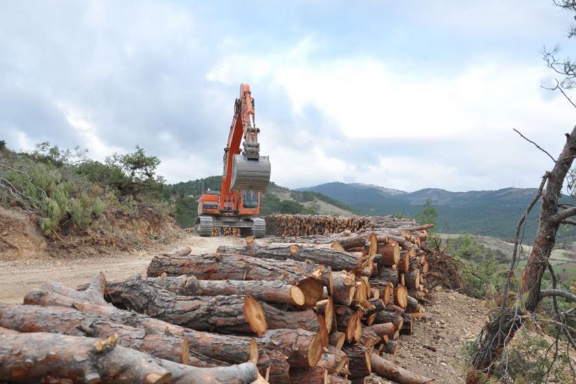 Ormanlık alanda kesilen ağaçlar