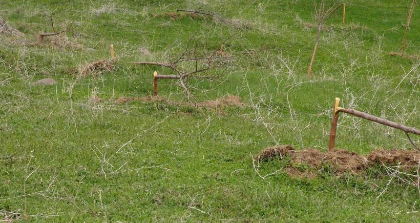 Erciş'te ağaçlar kesildi
