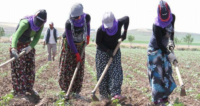 Mevsimlik işçilerin sorunlarını araştırma komisyonu kurulacak