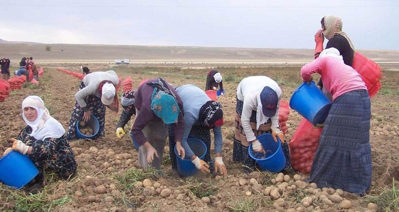 Mevsimlik işçilik  ömürlük sömürü