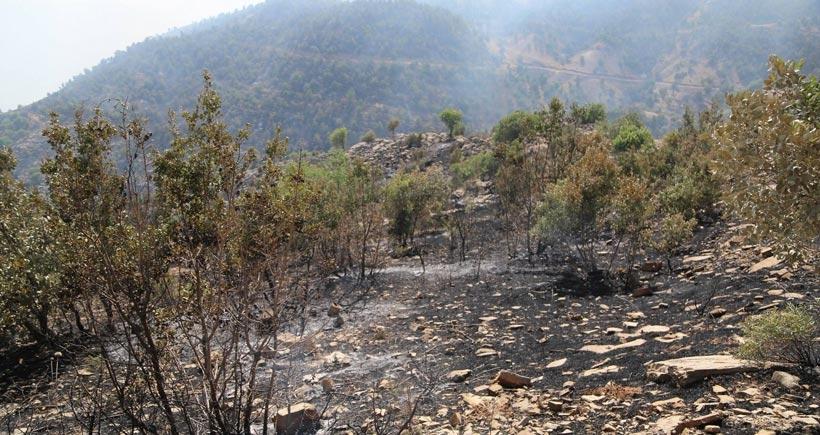 Cudi'de yangın yeniden başladı