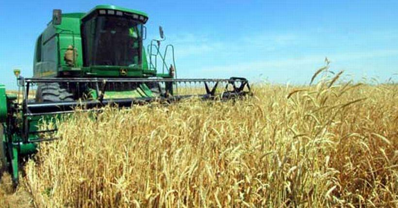 Tarımda suçlu kim: Doğa mı uygulanan politikalar mı?
