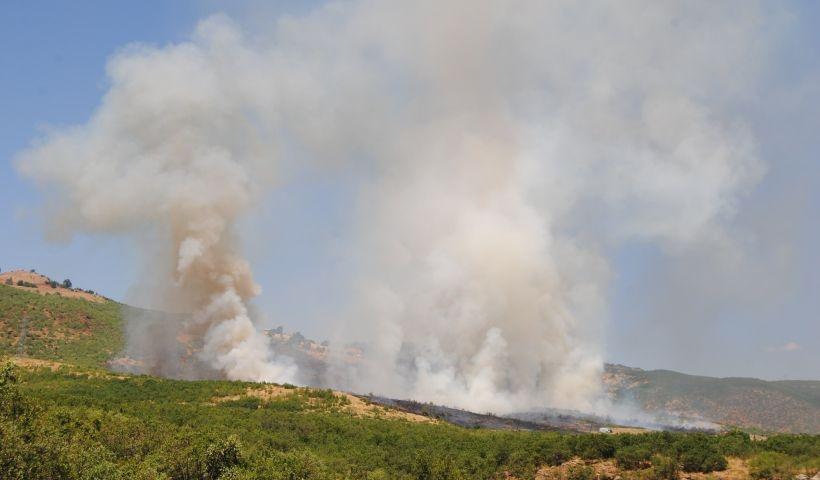 Dersim'deki orman yangını kontrol altına alındı