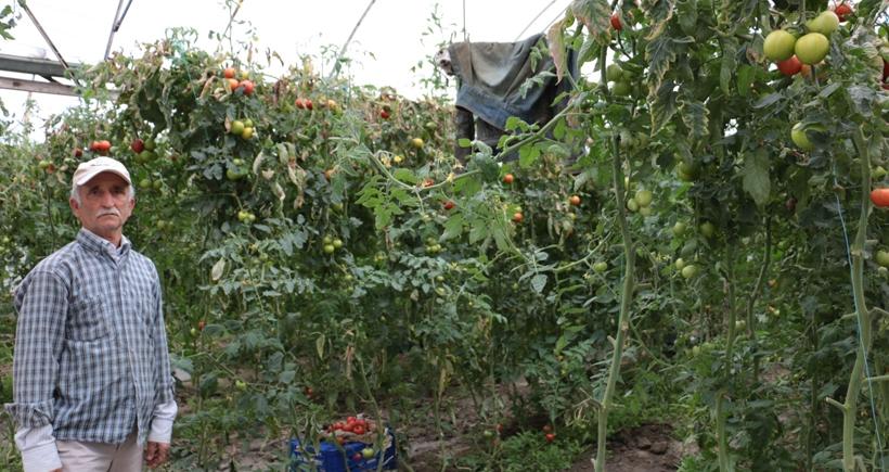 Seydikemerli domates üreticileri: Türkiye'nin en güzel yerinde aç yatıyoruz