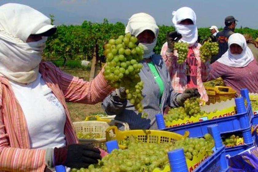 Yaş üzümde Rusya'ya ihracat başlıyor