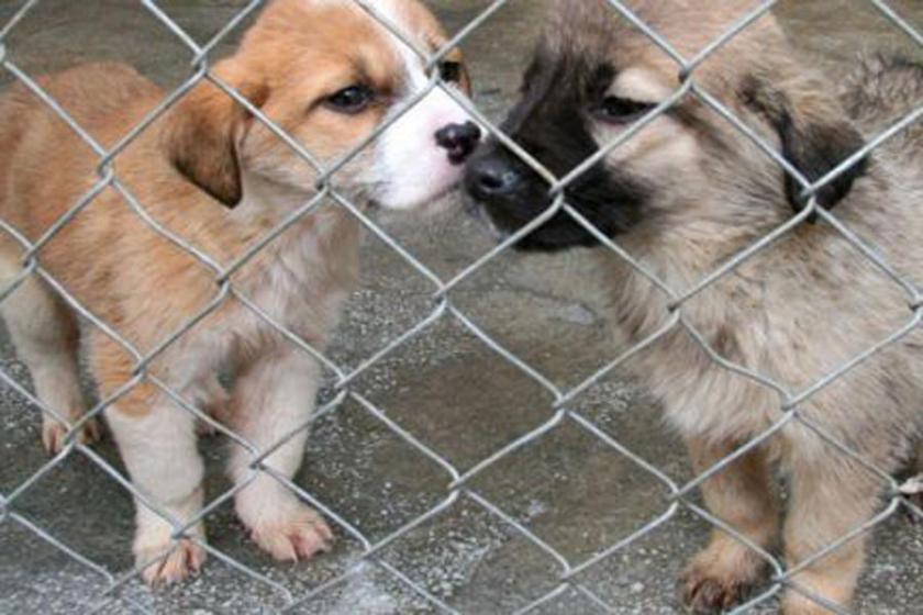 Hayvan koruma yasası, hayvanları korumuyor