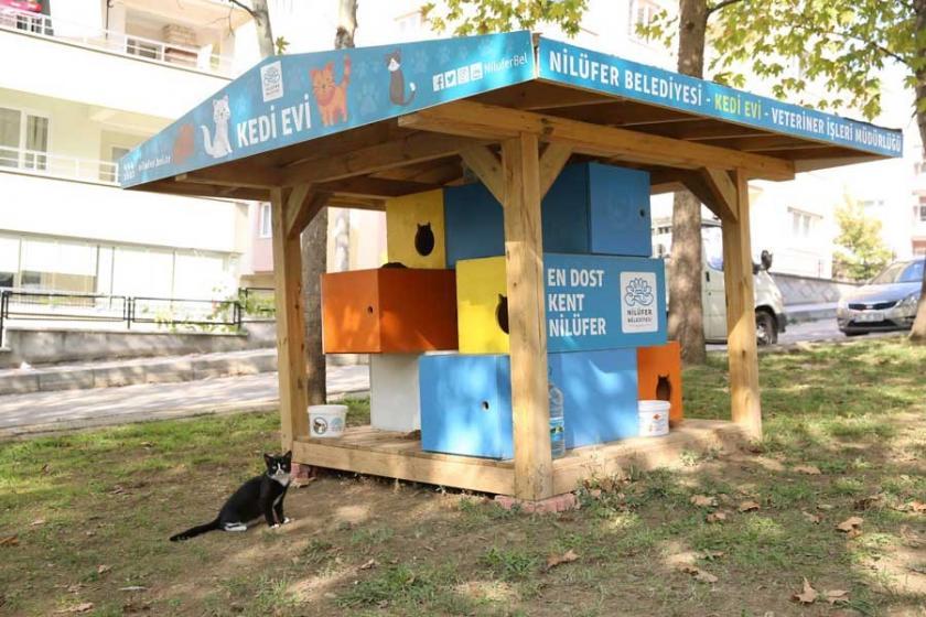 Nilüfer'de kedi evi sayısı artırıldı