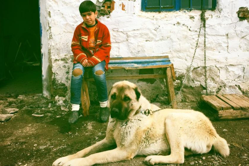 Caner : Filmi Hakkari'de çekseydim Kürtçe yapardım