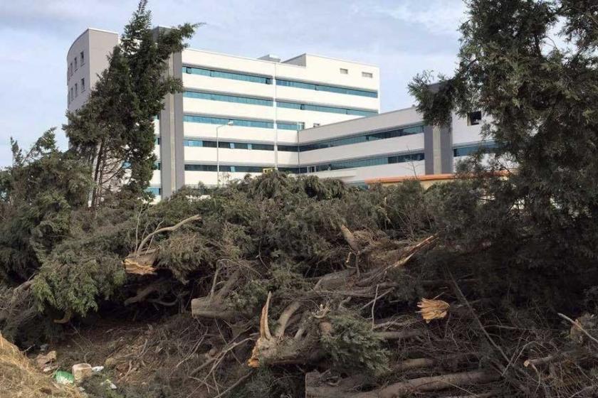 Hastane daha net görünsün diye ağaç kestiler