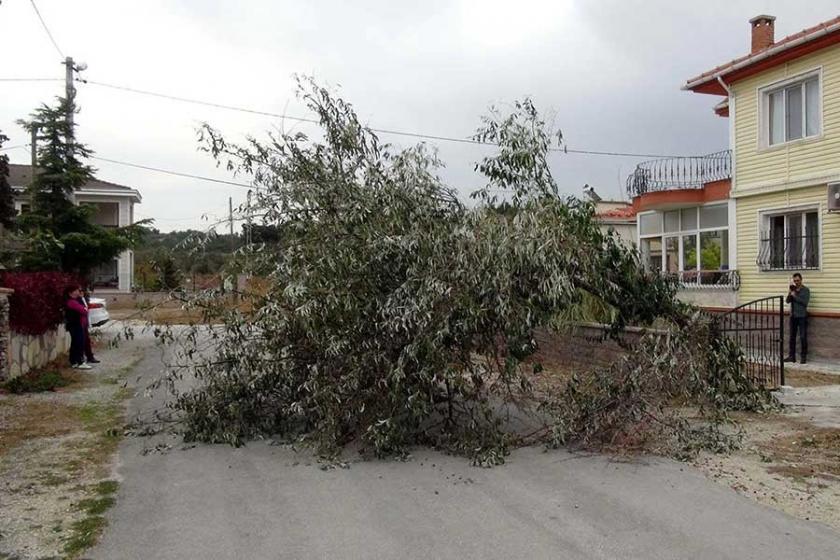 Çanakkale'de lodos ağaçları devirdi