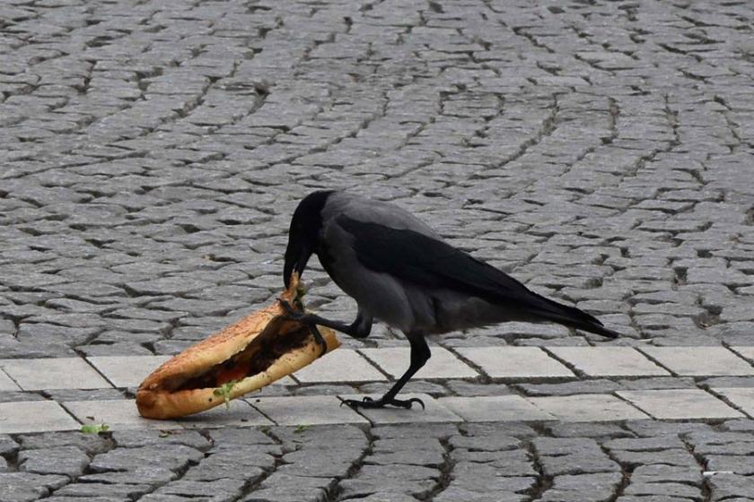 Karganın öğle yemeği ziyafeti: Ekmek arası döner