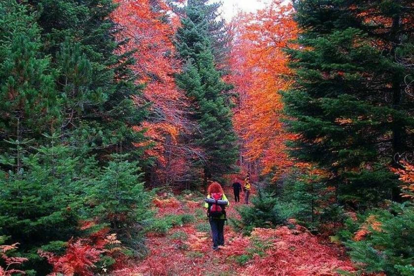Kazdağları'nda sonbaharda renk cümbüşü
