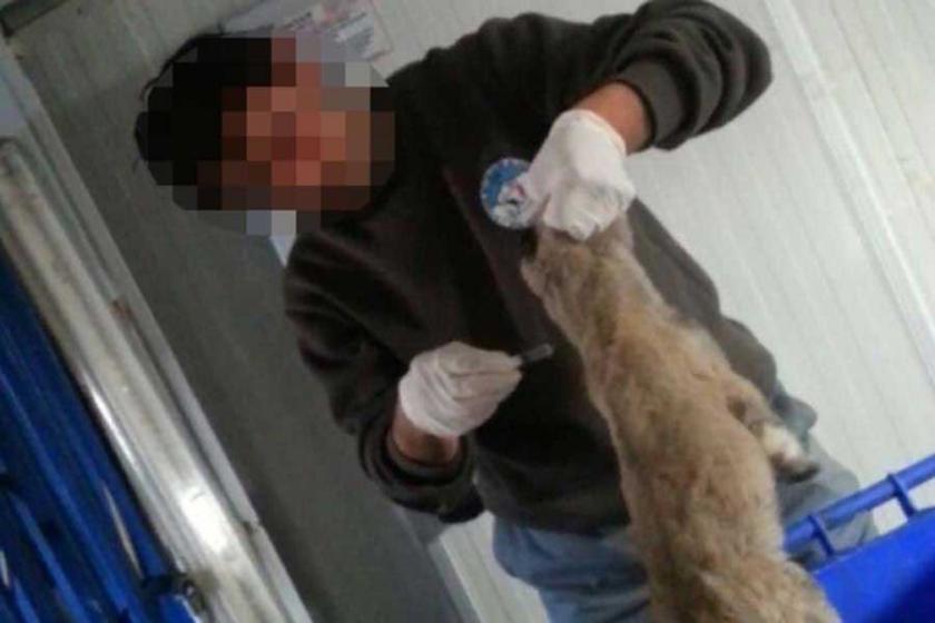 'Kayseri'de 104 köpek zehirlenerek öldürüldü!'
