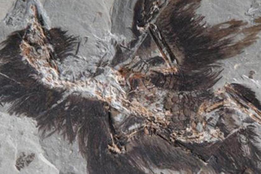 Dinozor tüyleri ne renkti?