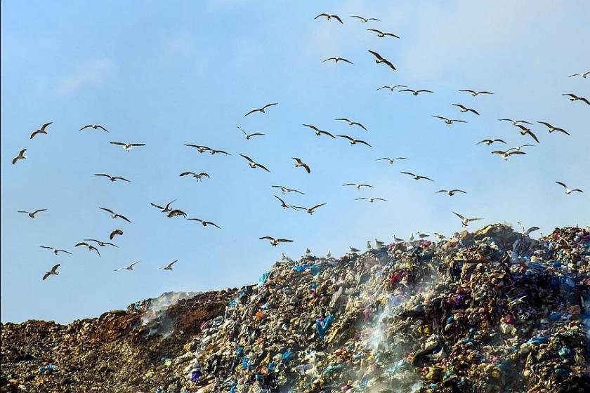 Van gölü martıları yemek için Karacadağ'a kadar uçuyor